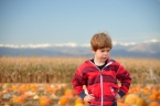 Ezra Elia Pumpkin Patch 2014-4